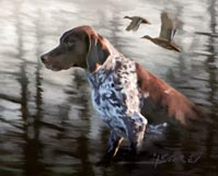 pointer with ducks in background