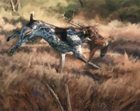 german shorthair pointer running with pheasant